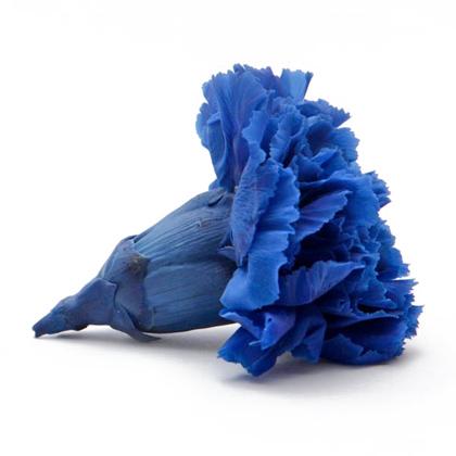 crazo-azul