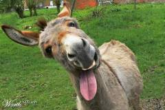 el-burro-y-al-familia